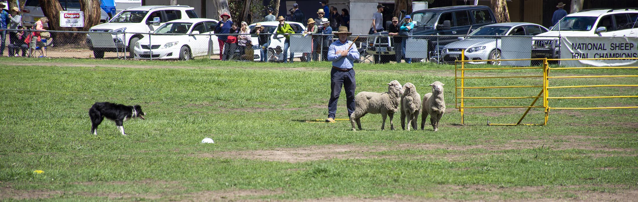 About National Sheep Dog Trial Championships Canberra