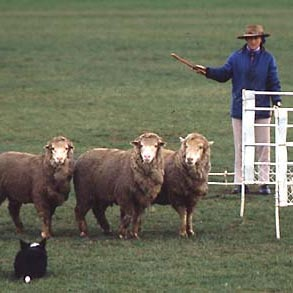 1973 National Sheep Dog Trials in Canberra ACT