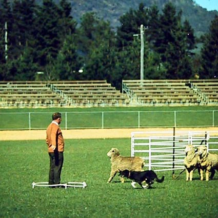 National Sheep Dog Trials in Canberra ACT